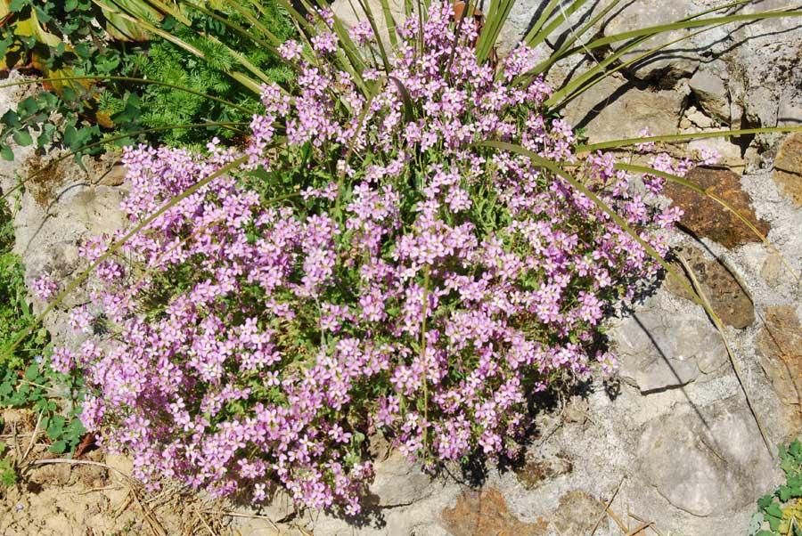 Les plantes du jardin hors zone des succulentes 10 for Les plantes du jardin