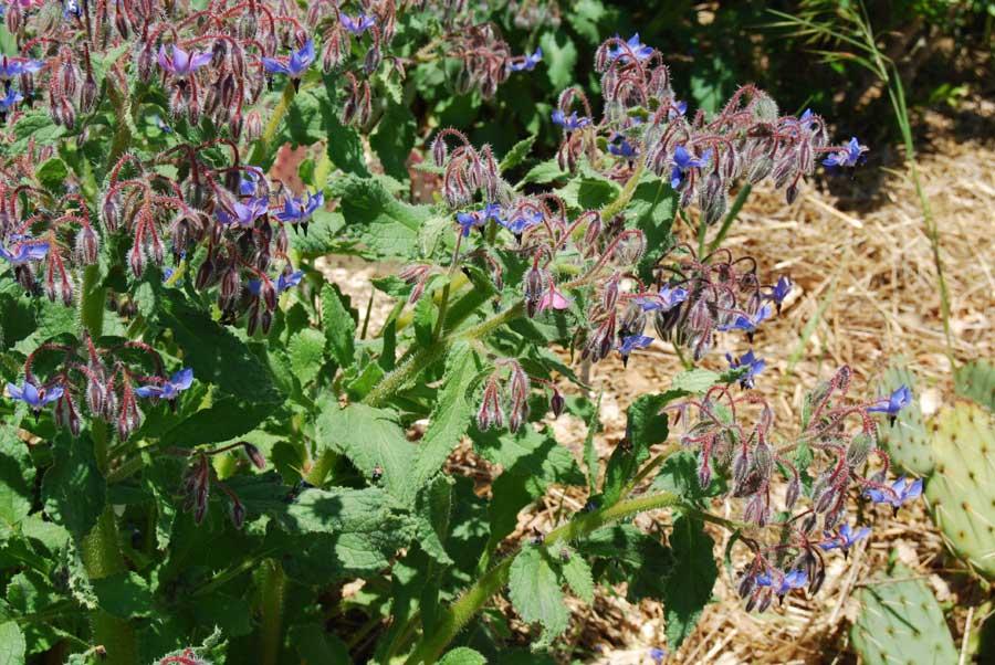 autres esp232ces du jardin de plantes grasses 2