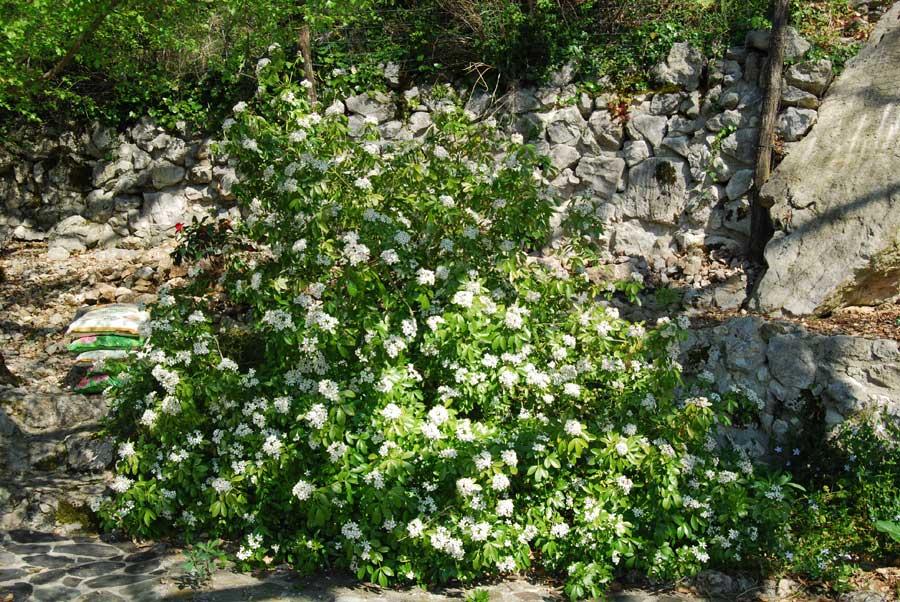 Les plantes du jardin hors zone des succulentes 7 for Les plantes du jardin
