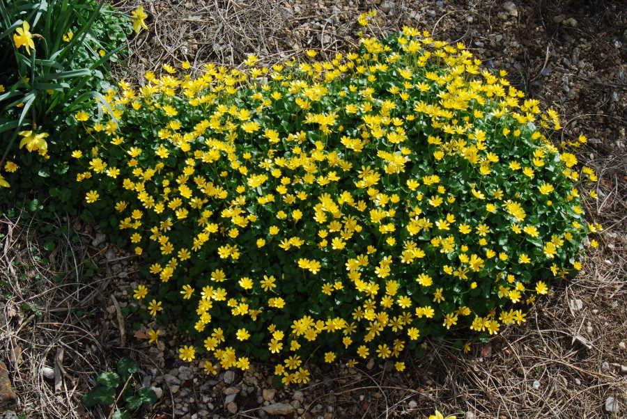 Les plantes du jardin hors zone des succulentes 5 # Plantes De Sous Bois Liste