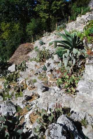 vues tendues du jardion de cactus et plantes grasses 1. Black Bedroom Furniture Sets. Home Design Ideas