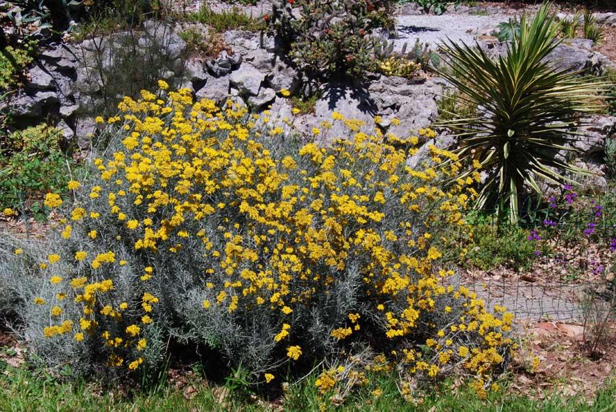 Les plantes du jardin hors zone des succulentes 8 for Les plantes du jardin