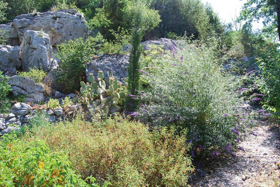 vues tendues du jardin de cactus et plantes grasses 3. Black Bedroom Furniture Sets. Home Design Ideas
