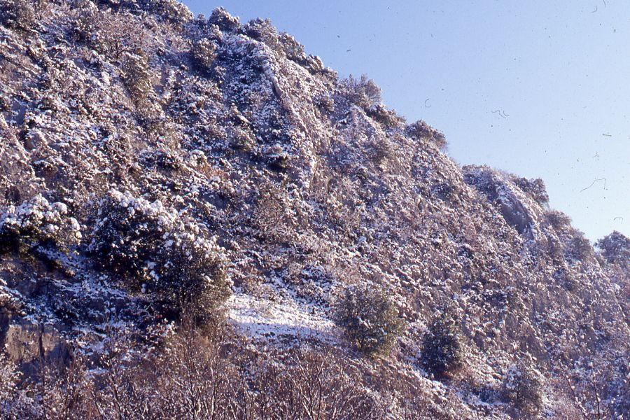 Le jardin de plantes succulentes sous la neige en hiver for Couvrir les plantes en hiver