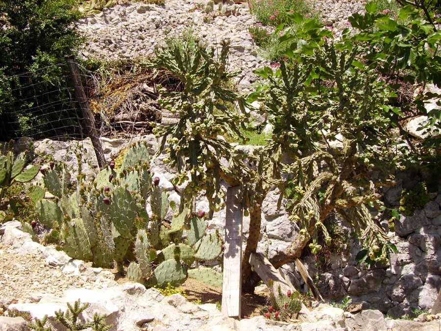 Vues de d tails du jardin de plantes succulentes 1 for Site de vente de plantes