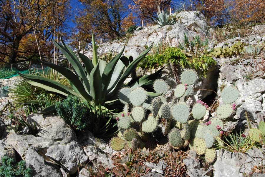 Vues de d tails du jardin de plantes succulentes 2 for Site de vente de plantes