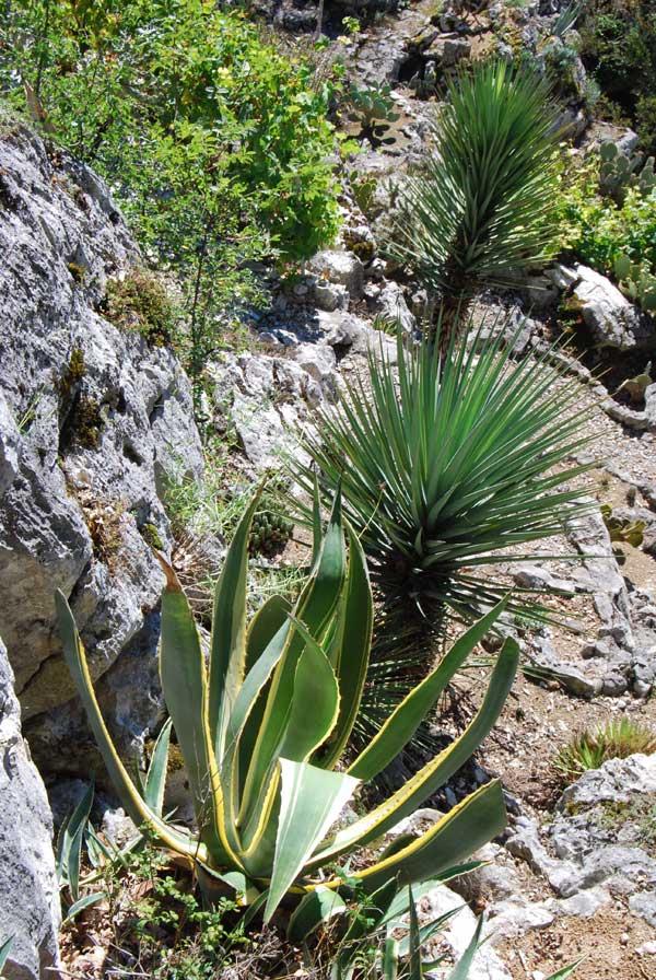 Vues de d tails du jardin de plantes grasses 6 for Site de vente de plantes