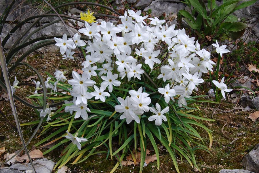 Plante grasse fleurs blanches for Plante blanche exterieur